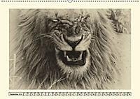 Safari - auf Katzensuche (Wandkalender 2019 DIN A2 quer) - Produktdetailbild 9
