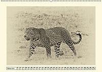 Safari - auf Katzensuche (Wandkalender 2019 DIN A2 quer) - Produktdetailbild 2