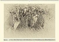 Safari - auf Katzensuche (Wandkalender 2019 DIN A2 quer) - Produktdetailbild 3