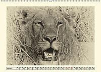 Safari - auf Katzensuche (Wandkalender 2019 DIN A2 quer) - Produktdetailbild 4