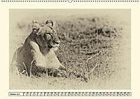 Safari - auf Katzensuche (Wandkalender 2019 DIN A2 quer) - Produktdetailbild 10