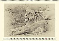 Safari - auf Katzensuche (Wandkalender 2019 DIN A2 quer) - Produktdetailbild 12