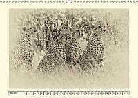 Safari - auf Katzensuche (Wandkalender 2019 DIN A3 quer) - Produktdetailbild 3