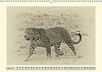 Safari - auf Katzensuche (Wandkalender 2019 DIN A3 quer) - Produktdetailbild 2