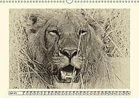 Safari - auf Katzensuche (Wandkalender 2019 DIN A3 quer) - Produktdetailbild 4