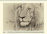 Safari - auf Katzensuche (Wandkalender 2019 DIN A3 quer) - Produktdetailbild 7