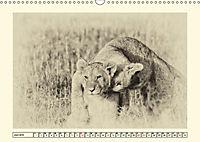 Safari - auf Katzensuche (Wandkalender 2019 DIN A3 quer) - Produktdetailbild 6