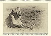 Safari - auf Katzensuche (Wandkalender 2019 DIN A3 quer) - Produktdetailbild 10