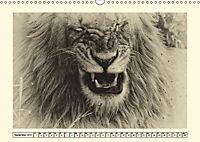 Safari - auf Katzensuche (Wandkalender 2019 DIN A3 quer) - Produktdetailbild 9