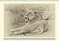 Safari - auf Katzensuche (Wandkalender 2019 DIN A3 quer) - Produktdetailbild 12