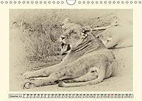 Safari - auf Katzensuche (Wandkalender 2019 DIN A4 quer) - Produktdetailbild 12