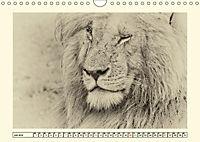 Safari - auf Katzensuche (Wandkalender 2019 DIN A4 quer) - Produktdetailbild 7