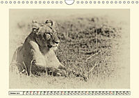 Safari - auf Katzensuche (Wandkalender 2019 DIN A4 quer) - Produktdetailbild 10