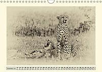 Safari - auf Katzensuche (Wandkalender 2019 DIN A4 quer) - Produktdetailbild 11
