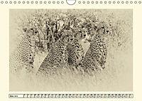 Safari - auf Katzensuche (Wandkalender 2019 DIN A4 quer) - Produktdetailbild 3