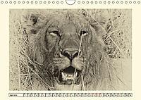 Safari - auf Katzensuche (Wandkalender 2019 DIN A4 quer) - Produktdetailbild 4