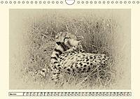 Safari - auf Katzensuche (Wandkalender 2019 DIN A4 quer) - Produktdetailbild 5