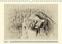 Safari - auf Katzensuche (Wandkalender 2019 DIN A4 quer) - Produktdetailbild 6