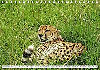 Safari Nijema - Unterwegs in der Masai Mara (Tischkalender 2019 DIN A5 quer) - Produktdetailbild 12