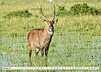 Safari Nijema - Unterwegs in der Masai Mara (Wandkalender 2019 DIN A3 quer) - Produktdetailbild 1
