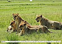 Safari Nijema - Unterwegs in der Masai Mara (Wandkalender 2019 DIN A3 quer) - Produktdetailbild 7