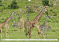 Safari Nijema - Unterwegs in der Masai Mara (Wandkalender 2019 DIN A3 quer) - Produktdetailbild 6