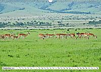 Safari Nijema - Unterwegs in der Masai Mara (Wandkalender 2019 DIN A3 quer) - Produktdetailbild 9