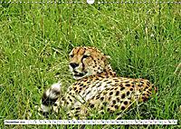 Safari Nijema - Unterwegs in der Masai Mara (Wandkalender 2019 DIN A3 quer) - Produktdetailbild 12