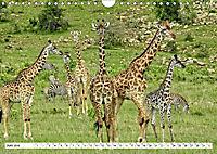 Safari Nijema - Unterwegs in der Masai Mara (Wandkalender 2019 DIN A4 quer) - Produktdetailbild 6