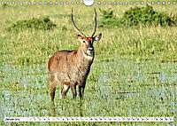 Safari Nijema - Unterwegs in der Masai Mara (Wandkalender 2019 DIN A4 quer) - Produktdetailbild 1