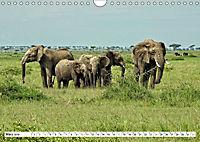 Safari Nijema - Unterwegs in der Masai Mara (Wandkalender 2019 DIN A4 quer) - Produktdetailbild 3