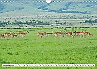 Safari Nijema - Unterwegs in der Masai Mara (Wandkalender 2019 DIN A4 quer) - Produktdetailbild 9