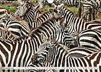 Safari Nijema - Unterwegs in der Masai Mara (Wandkalender 2019 DIN A4 quer) - Produktdetailbild 11