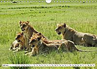 Safari Nijema - Unterwegs in der Masai Mara (Wandkalender 2019 DIN A4 quer) - Produktdetailbild 7