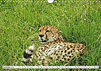 Safari Nijema - Unterwegs in der Masai Mara (Wandkalender 2019 DIN A4 quer) - Produktdetailbild 12