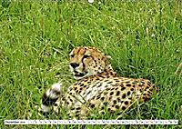 Safari Nijema - Unterwegs in der Masai Mara (Wandkalender 2019 DIN A2 quer) - Produktdetailbild 12