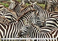 Safari Nijema - Unterwegs in der Masai Mara (Wandkalender 2019 DIN A2 quer) - Produktdetailbild 11