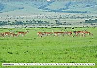 Safari Nijema - Unterwegs in der Masai Mara (Wandkalender 2019 DIN A2 quer) - Produktdetailbild 9