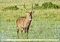 Safari Nijema - Unterwegs in der Masai Mara (Tischkalender 2019 DIN A5 quer) - Produktdetailbild 1