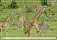 Safari Nijema - Unterwegs in der Masai Mara (Tischkalender 2019 DIN A5 quer) - Produktdetailbild 6