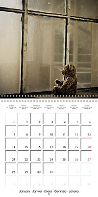 Sammy visits abandoned places (Wall Calendar 2019 300 × 300 mm Square) - Produktdetailbild 1