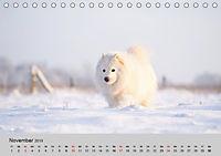 Samojeden - Liebenswerte Fellkugeln (Tischkalender 2019 DIN A5 quer) - Produktdetailbild 5