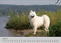 Samojeden - Liebenswerte Fellkugeln (Tischkalender 2019 DIN A5 quer) - Produktdetailbild 11