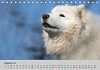 Samojeden - Liebenswerte Fellkugeln (Tischkalender 2019 DIN A5 quer) - Produktdetailbild 4