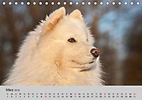 Samojeden - Liebenswerte Fellkugeln (Tischkalender 2019 DIN A5 quer) - Produktdetailbild 8