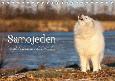 Samojeden - Liebenswerte Fellkugeln (Tischkalender 2019 DIN A5 quer), Tierpfoto Annett Mirsberger