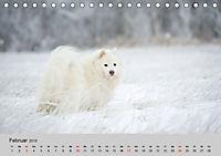 Samojeden - Liebenswerte Fellkugeln (Tischkalender 2019 DIN A5 quer) - Produktdetailbild 2