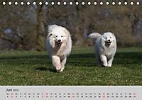 Samojeden - Liebenswerte Fellkugeln (Tischkalender 2019 DIN A5 quer) - Produktdetailbild 6