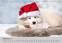 Samojeden - Liebenswerte Fellkugeln (Tischkalender 2019 DIN A5 quer) - Produktdetailbild 12