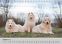 Samojeden - Liebenswerte Fellkugeln (Tischkalender 2019 DIN A5 quer) - Produktdetailbild 10